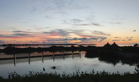Sunrise with dolphins at Hawks Cay.
