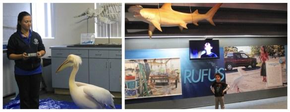 Clearwater Aquarium Dolphin Tales