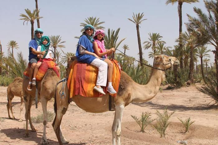 family riding camels in Morocco