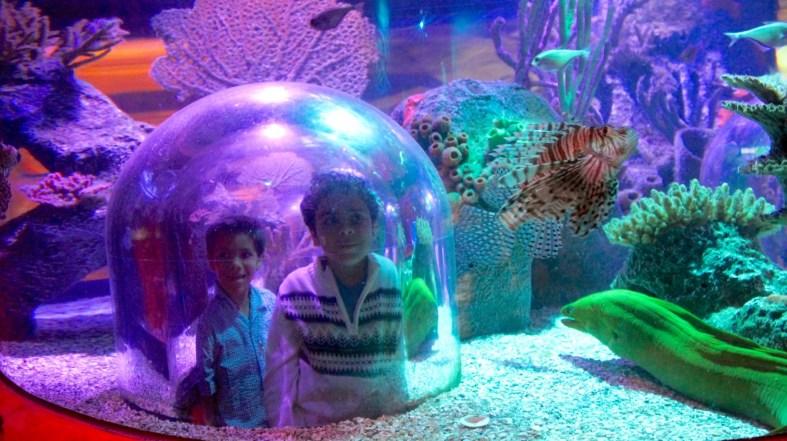 SeaLife Aquarium Orlando