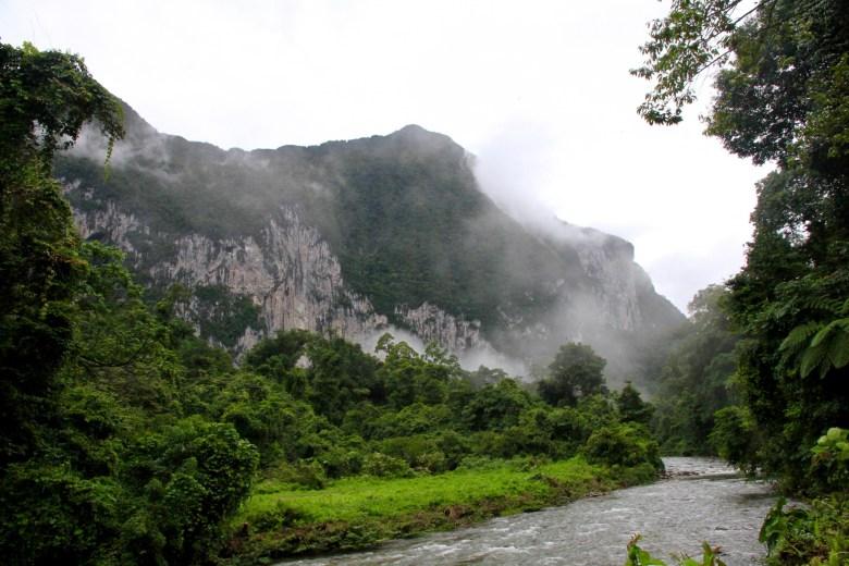 Malaysia jungles