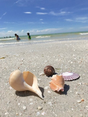 5 Great Reasons for Staying at the Pink Shell Resort & Marina in Fort Myers Beach This Fall