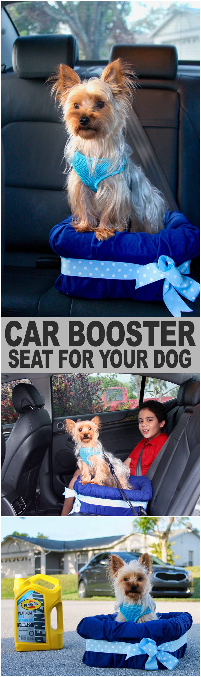 DIY Car Booster Seat For Your Dog