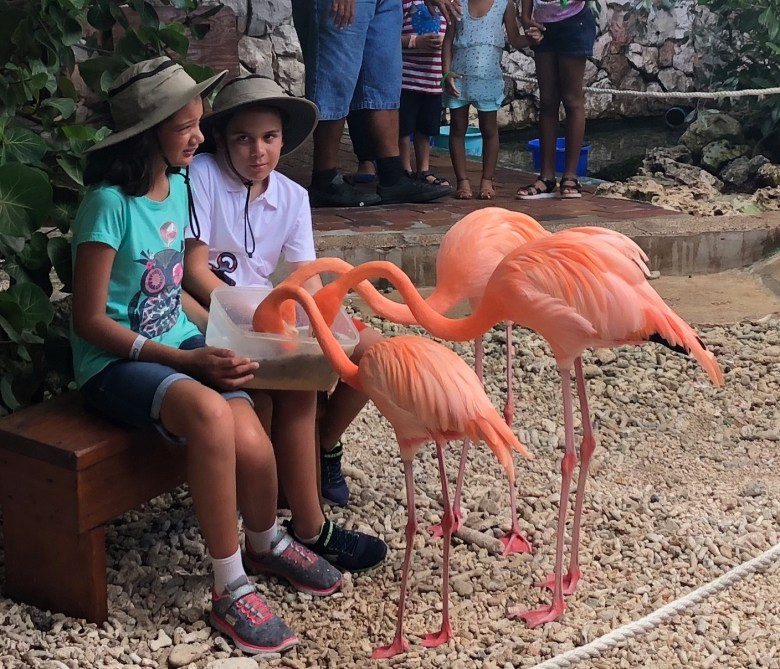 Feeding flamingos at the Curacao Sea Aquarium