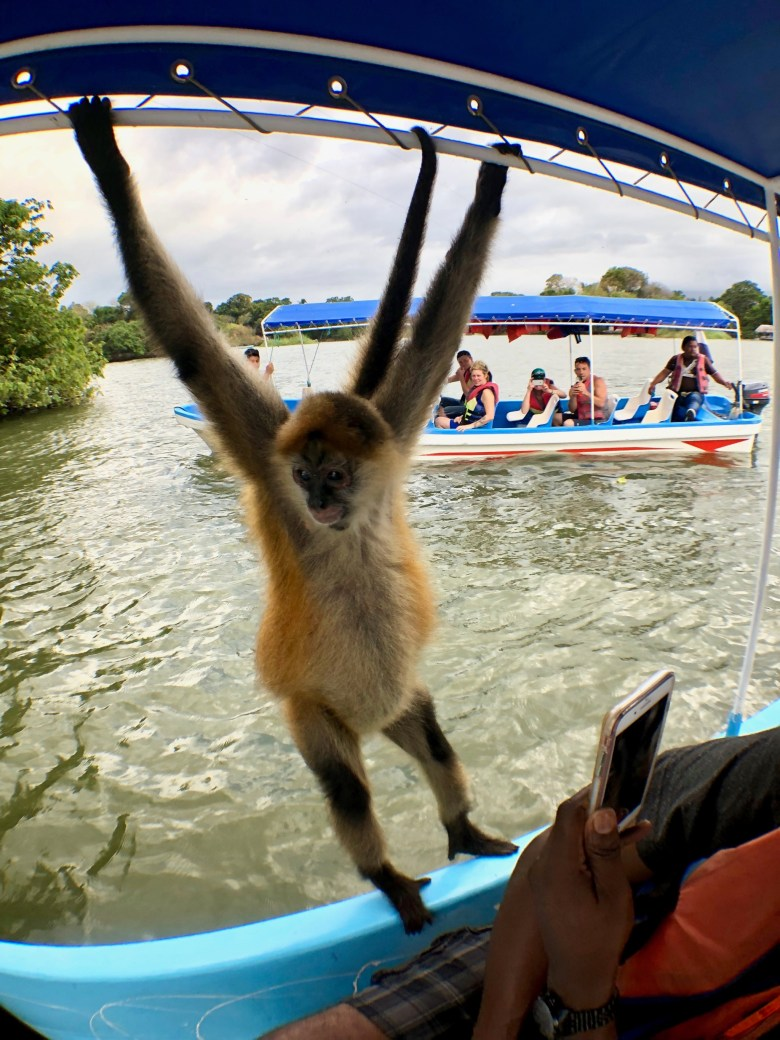 Spider monkey at the islets of Granada in Nicaragua
