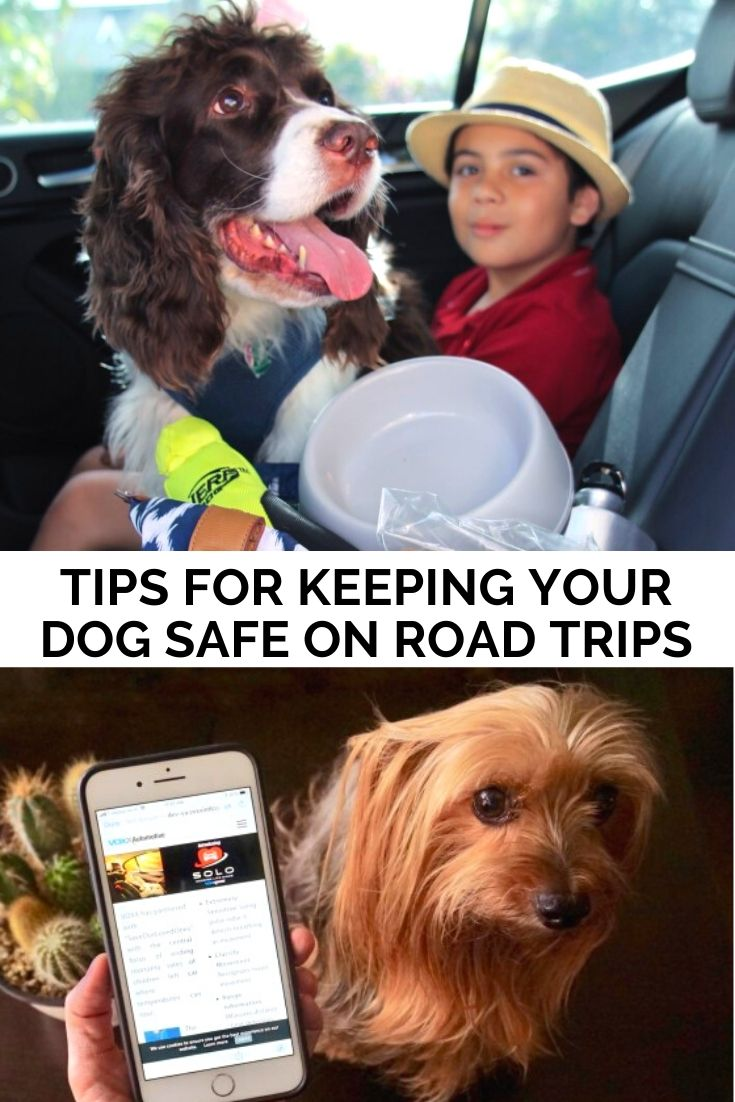 Tips For Keeping Your Dog Safe During Spring And Summer Road Trips