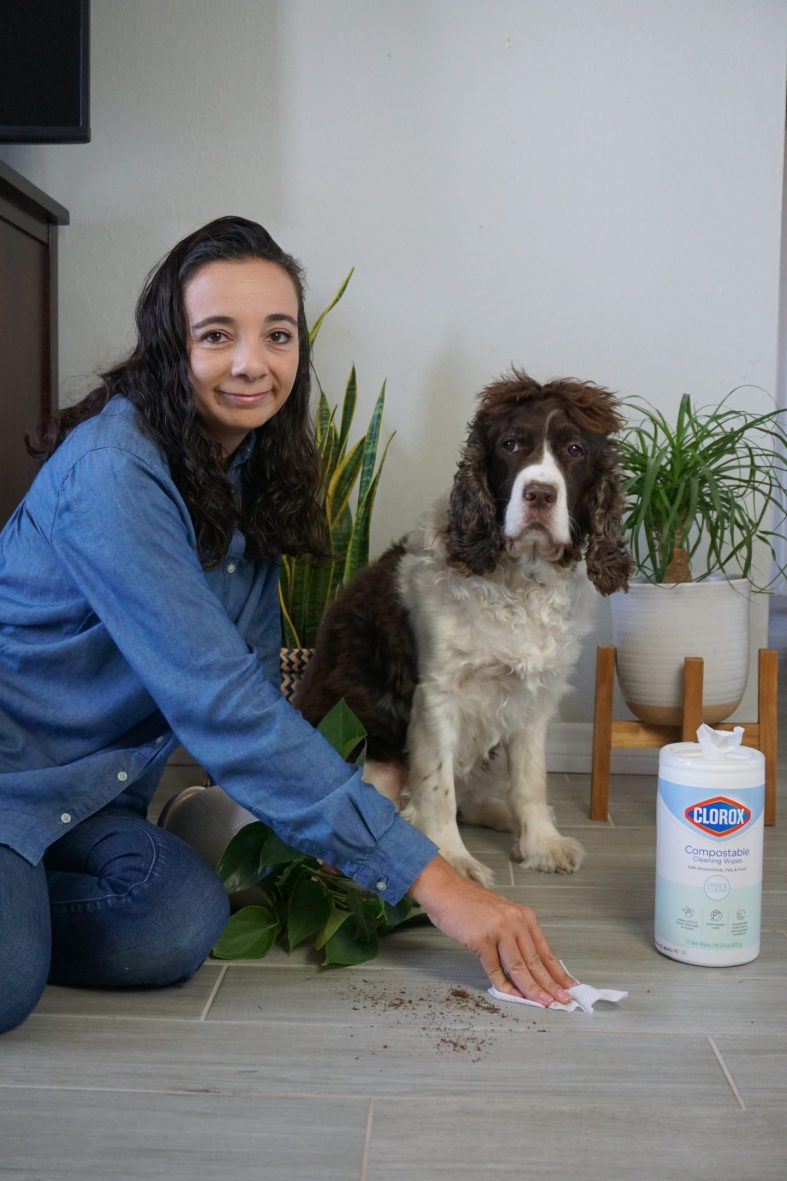 Spring Cleaning Tips that are Safe for Pets