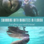 Swimming with manatees in Florida everything you need to know