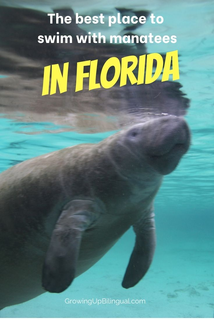 Best place for swimming with manatees in Florida