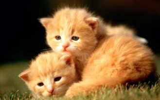 cute-baby-animal-pictures-wallpapers
