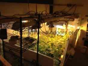 Beginner Grow Room