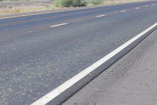 caterpillars in road