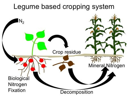 4439_Legume_based_cropping_system_graphic.jpg