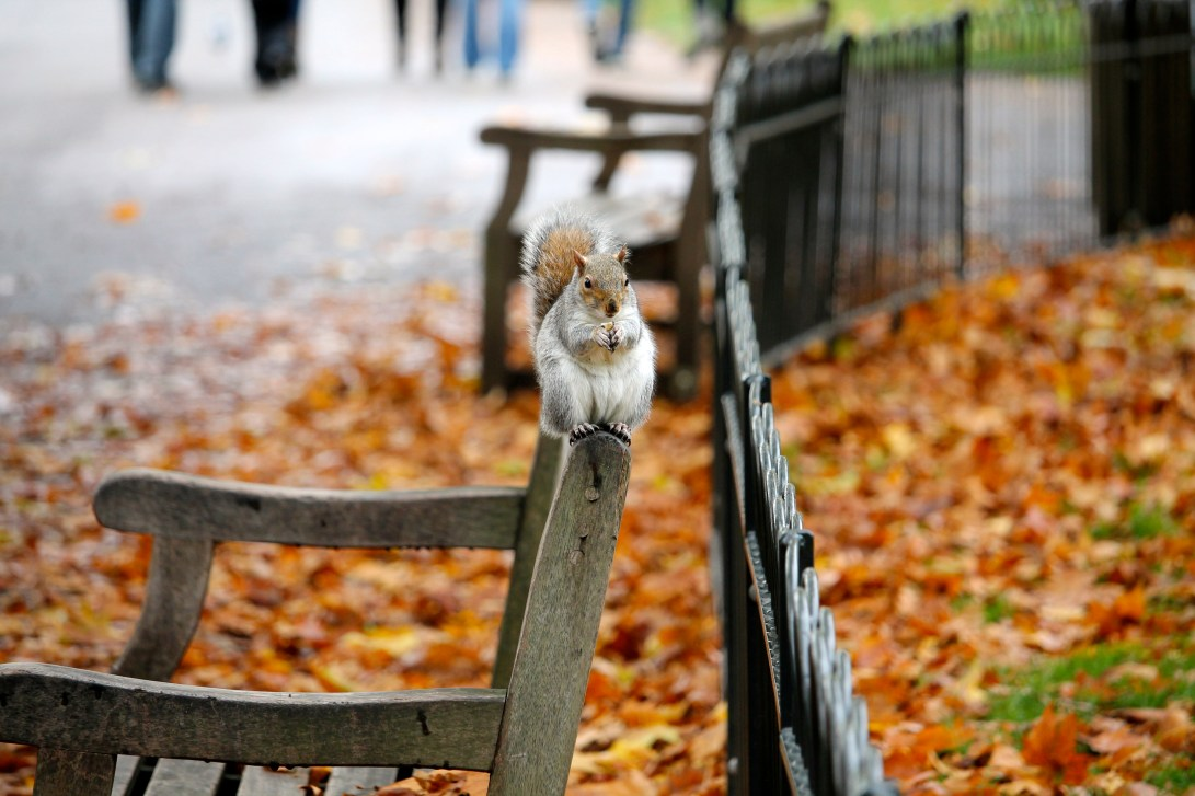 Canva - Selective Focus Photography of Squirrel Sitting on Armchair
