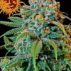 liberty-haze-growshop-growmart