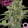 Semena velice výnosné marihuany Growers Choice Monsterbud