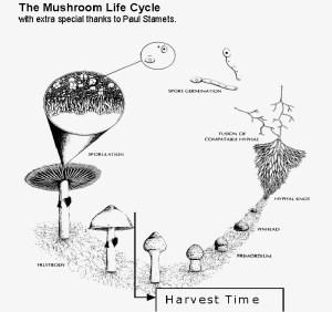 Magic mushrooms grow kits Instructions  Growtrades