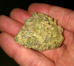 Glitter bud in hand - click for closeup of this picture!