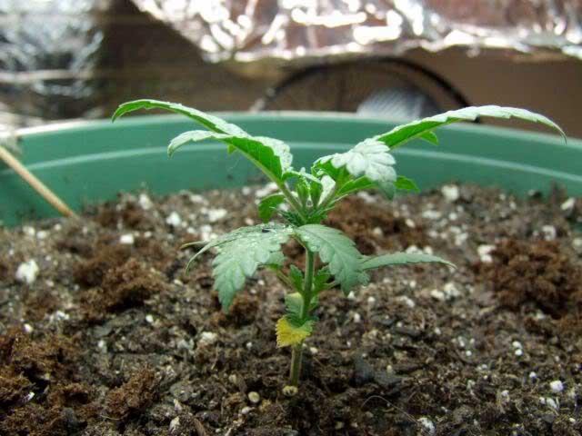 growing info | ledhydroponicsblog