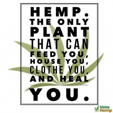 Could hemp finally become legal in the US?