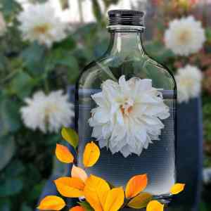 Read more about the article January Inspiration – A Dynasty of Dahlias