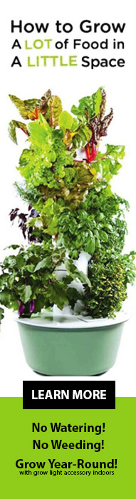 How to Grow a Lot of Food in a Little Space