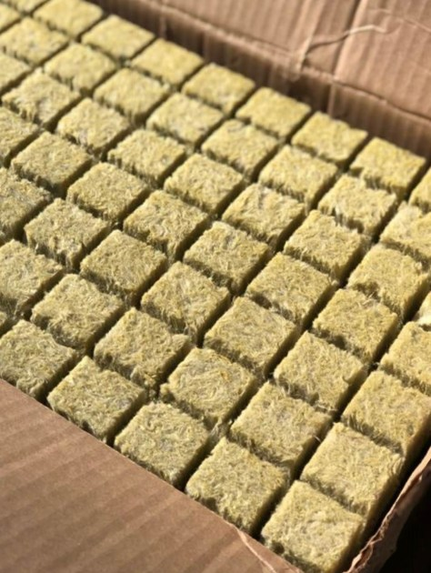 Underside of rock wool cubes ready for hydroponic growing