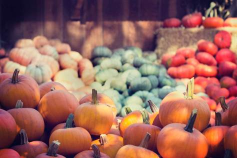 """Pumpkin patch at local farm ready for guests to pick out the """"perfect pumpkin"""" for their front porch."""