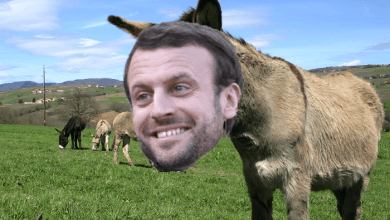 Photo de Les ânes du pragmatisme