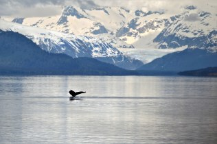 whale-with-mountains-web