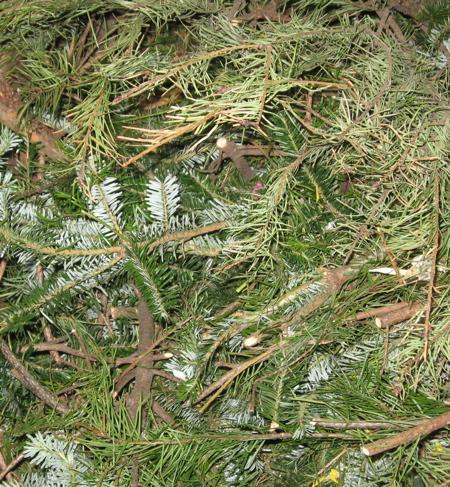 rb-09-prep-pine