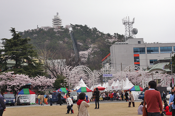 jinhae cherry blossom festival, cherry blossoms in korea