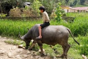 Boy riding water buffalo