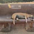 slumdogs, Photo Essay: Slumdogs of Mumbai, photos of dogs in mumbai