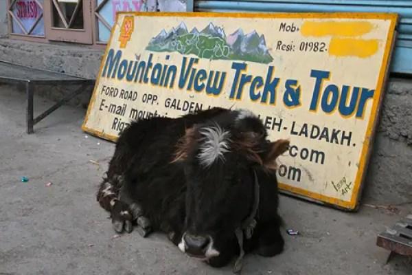 tour agencies in leh ladakh