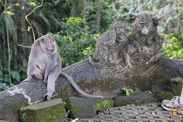 monkey forest ubud, things to do ubud, monkey forest bali, top attractions bali