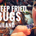deep fried bug taste test thailand