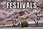korea festivals, festivals in korea