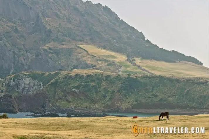 Olle trails wonders near Sunrise Peak, olle trails jeju, Olle trails in Jeju, hiking in korea, hiking in jeju, hiking trails jeju island sightseeing map, what to do in jeju island, what to see in jeju