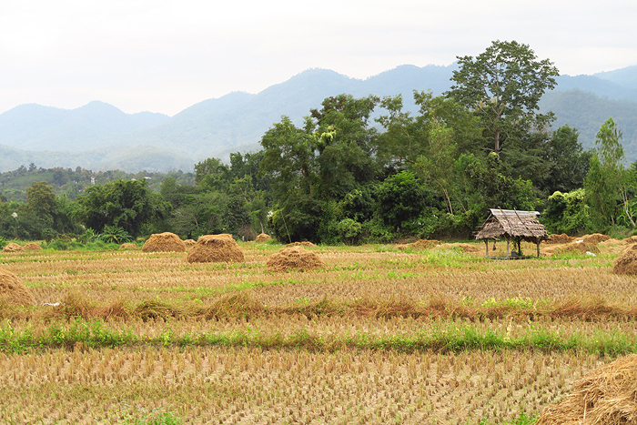 pai in love, pai countryside, pai thailand, Things to Do in Pai, top attractions in Pai, pai sightseeing, top things to do in pai,