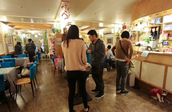 best things to do taipei, taipei travel guide, taipei top attractions, top attractions taipei, cat cafes taipei, cafe and cats 1988Unusual Things to Do in Taipei,