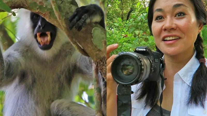 Chitwan national park safaris, chitwan safaris, meghauli serai safari, taj safaris