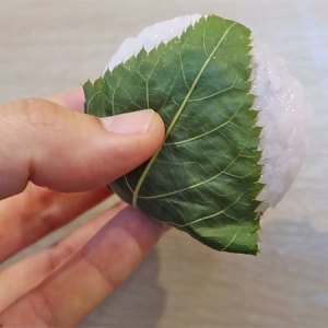 sakura mochi, top 10 sakura sweets, top 10 sakura snacks, 10 must try sakura snacks