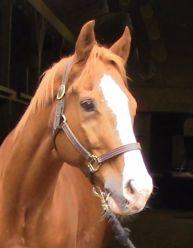 Rocker -- Qtr Horse