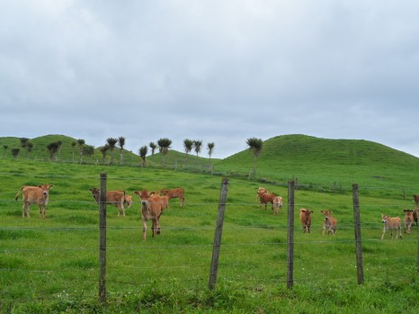 Calfs and green hobbit mounds