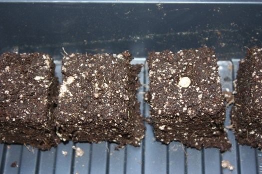 These homemade seed starting cubes can be used to well, start seeds of course.,