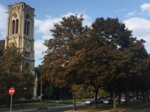 Jasperallee an der Paulikirche