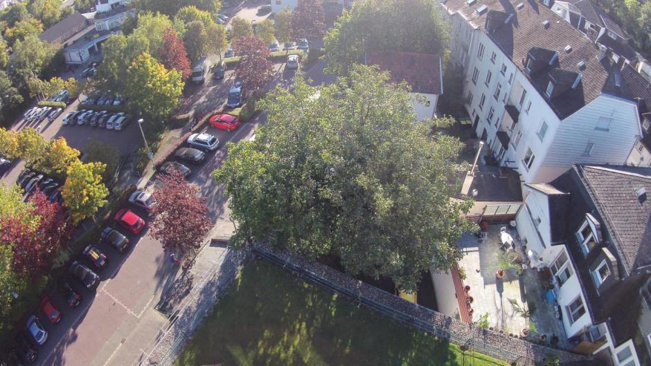 Meinerzhagen, Schaumgasse, Walnussbaum von oben. © 1. Oktober 2015 Luftaufnahme/Foto: Rüdiger Wirth
