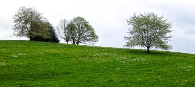 Frühlingsgrün, wie gemalt
