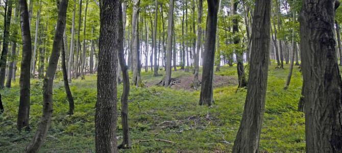 Hunde in Wald und Flur an die Leine?